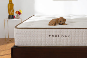 Real Bed natural mattress with puppy on top..