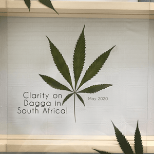 Clarity on Dagga in South Africa! 24 May 2020