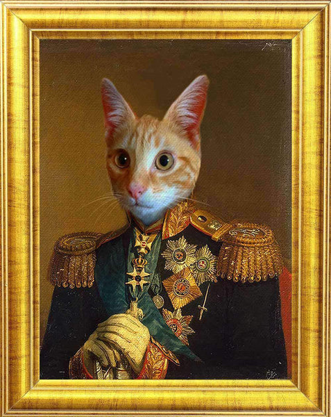 cat in military uniform portrait