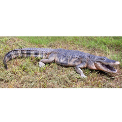 Stalking Swamp Alligator Statue - Sculptcha