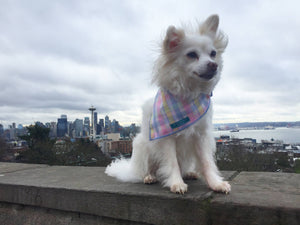 Dog Bandana, Pastel Plaid Bandana, Plaid Bandana, Choose your trim color!