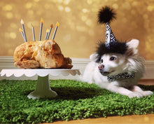 Load image into Gallery viewer, Birthday Candles, Dog Birthday hat, Dog Birthday, Cat Birthday Hat
