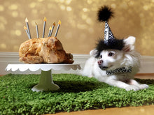 Load image into Gallery viewer, Chihuahua Birthday Hat