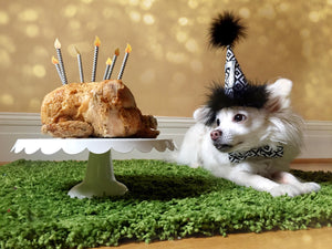 Chihuahua Birthday Hat