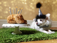 Load image into Gallery viewer, Paw Print Dog or Cat Birthday Hat
