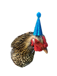 Pink Mini Party Hat, Hedgehog Party Hat, Chicken Party Hat, Ferret Party Hat, Blue and White Birthday Hat