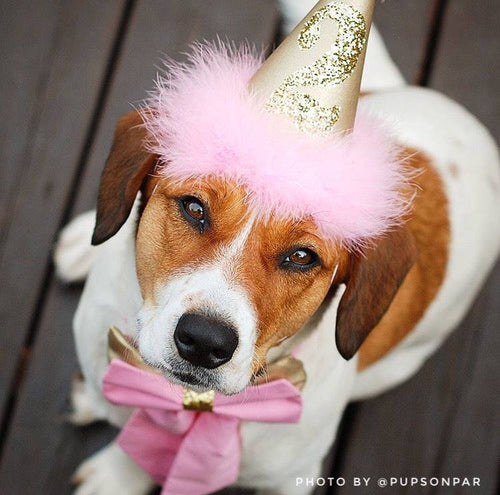 Pink and Gold Dog Birthday Hat, Dog Birthday Hat, Baby Pink, Princess Birthday Hat