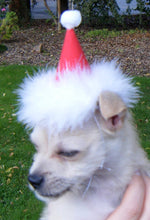 Load image into Gallery viewer, Happy Birthday Party Hat for Dog or Cat