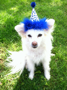 Bone Theme Dog Birthday Hat