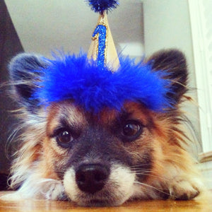 Dog Birthday Hat, Cat Birthday Hat, Gold and Blue