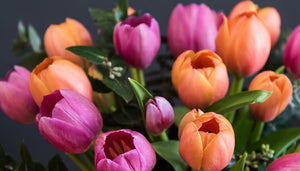 Caring for your Tulips
