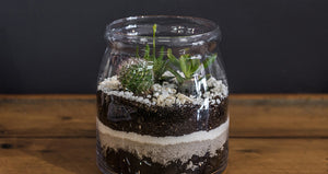 Caring for your Terrarium