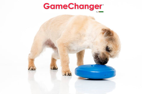 gamechanger-dog-toy-behavioral-tool