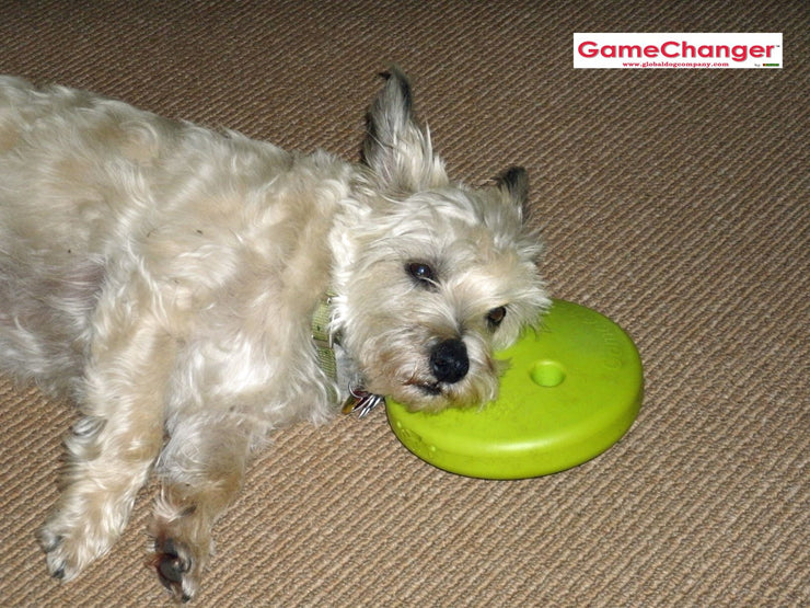 gamechanger-dog-toy-and-behavioral-tool4-globaldogcompany