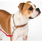 bark-busters-leather-communication-collar-global-dog-company