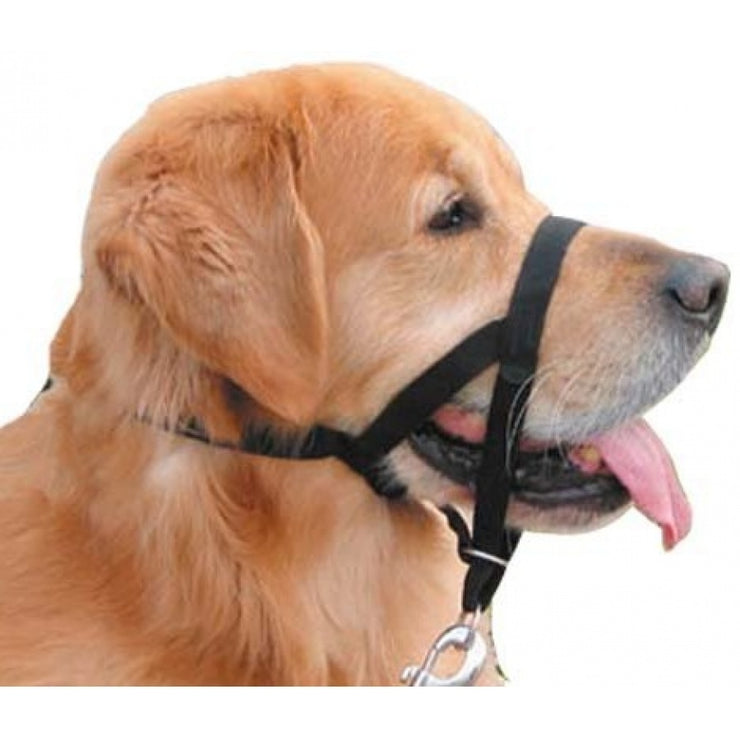walk-n-train-head-halter-global-dog-company