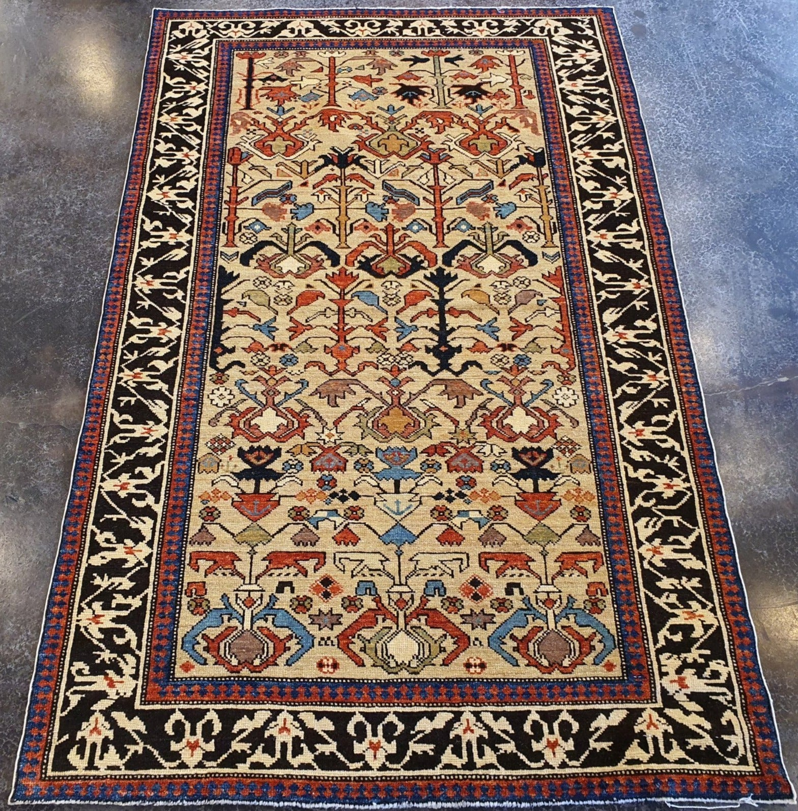 Caucasian Finely Knotted Shirvan Rug