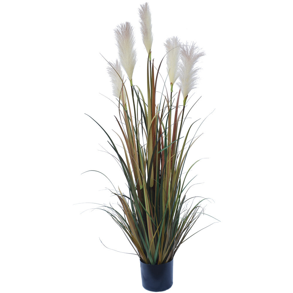Flowering Native Fox Tail Grass 120 cm