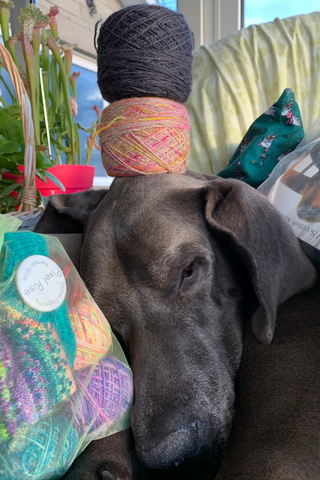 close up of a blue great danes face who is alseep. he has two cakes of yarn on his head. one ontop of the other. one is natural with pink and yellow and the top one is a storm grey. he also has a green project bag on his right handside. on his left infront of his nose you can see a green gauze bag which shows some multi coloured balls of tiny yarn inside and a multicoloured striped sock.