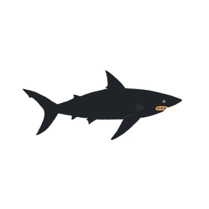 Dark Waters Shark