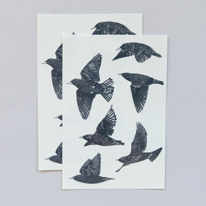 European Starlings Sheet