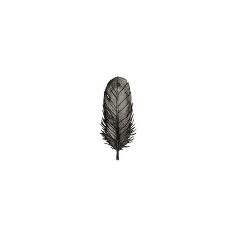 Black Bird Feather