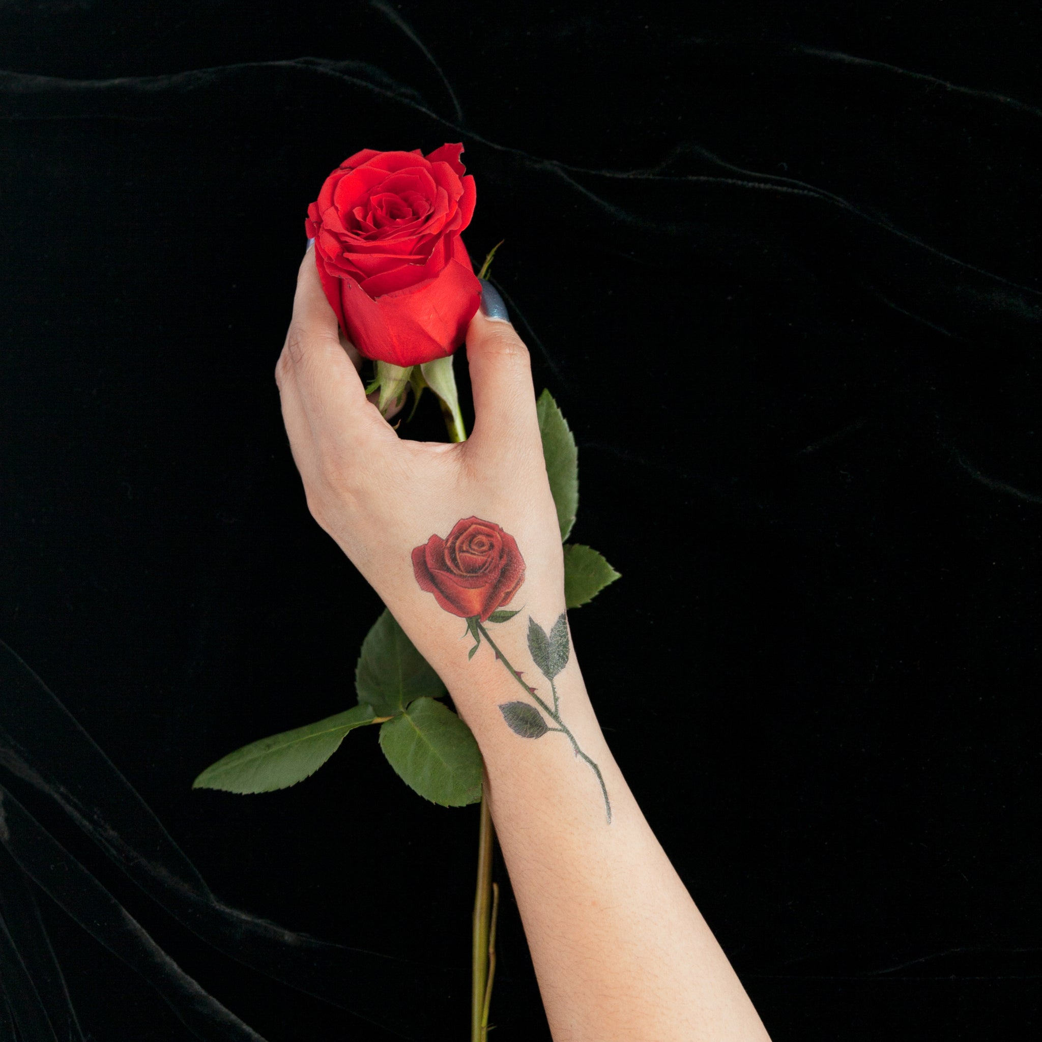 Red Rose By Berkley Illustrations Tattly Temporary Tattoos