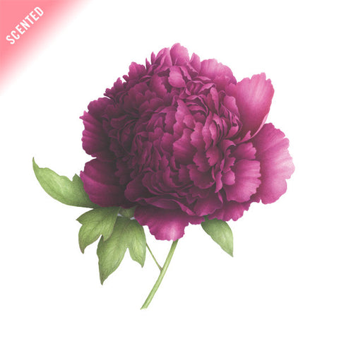 Purple Peony (Scented)