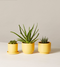 Load image into Gallery viewer, The Sill Collection Succulents