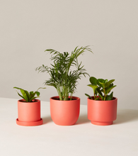 Load image into Gallery viewer, The Sill Collection  Pet Friendly Plants