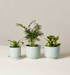 The Sill Collection  Pet Friendly Plants