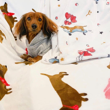 Dachshund Valentines Day Plush Blanket