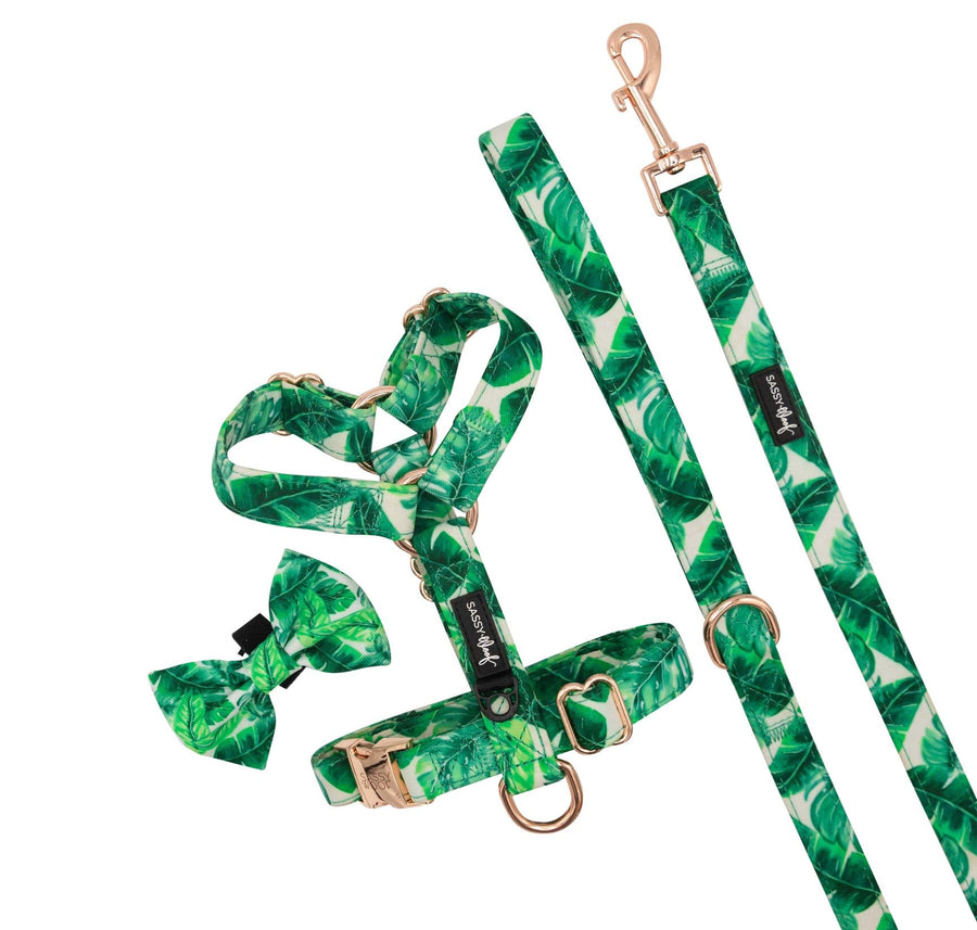 Strap Harness - Verano - Coco and Chili's Shop
