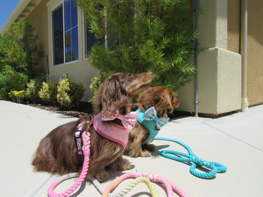 Reversible Harness - Wag Your Teal