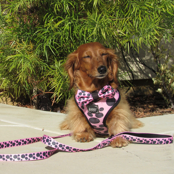 ADJUSTABLE HARNESS - DOTTY