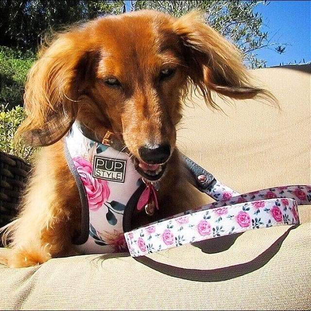 Harness - Fresh Blooms - Coco and Chili's Shop
