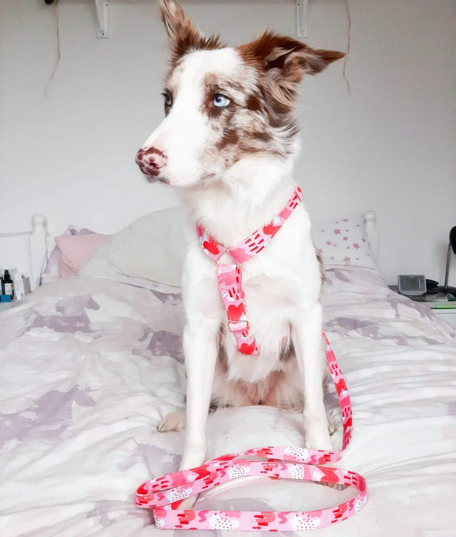 Leash - Pink Abstract – Rose Gold - Coco and Chili's Shop