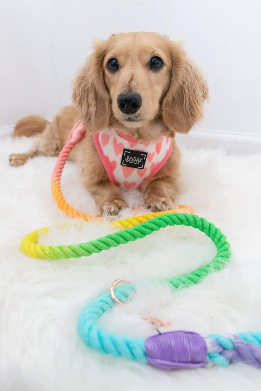 Rope Leash - Piñata - Coco and Chili's Shop