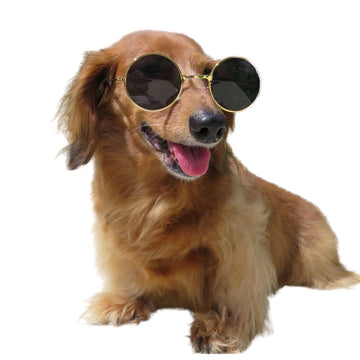 Sunglasses for Dogs - Medium - Coco and Chili's Shop