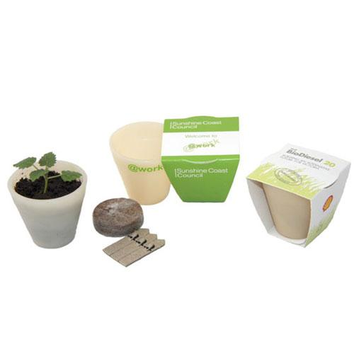 Seed Pot with Wrap