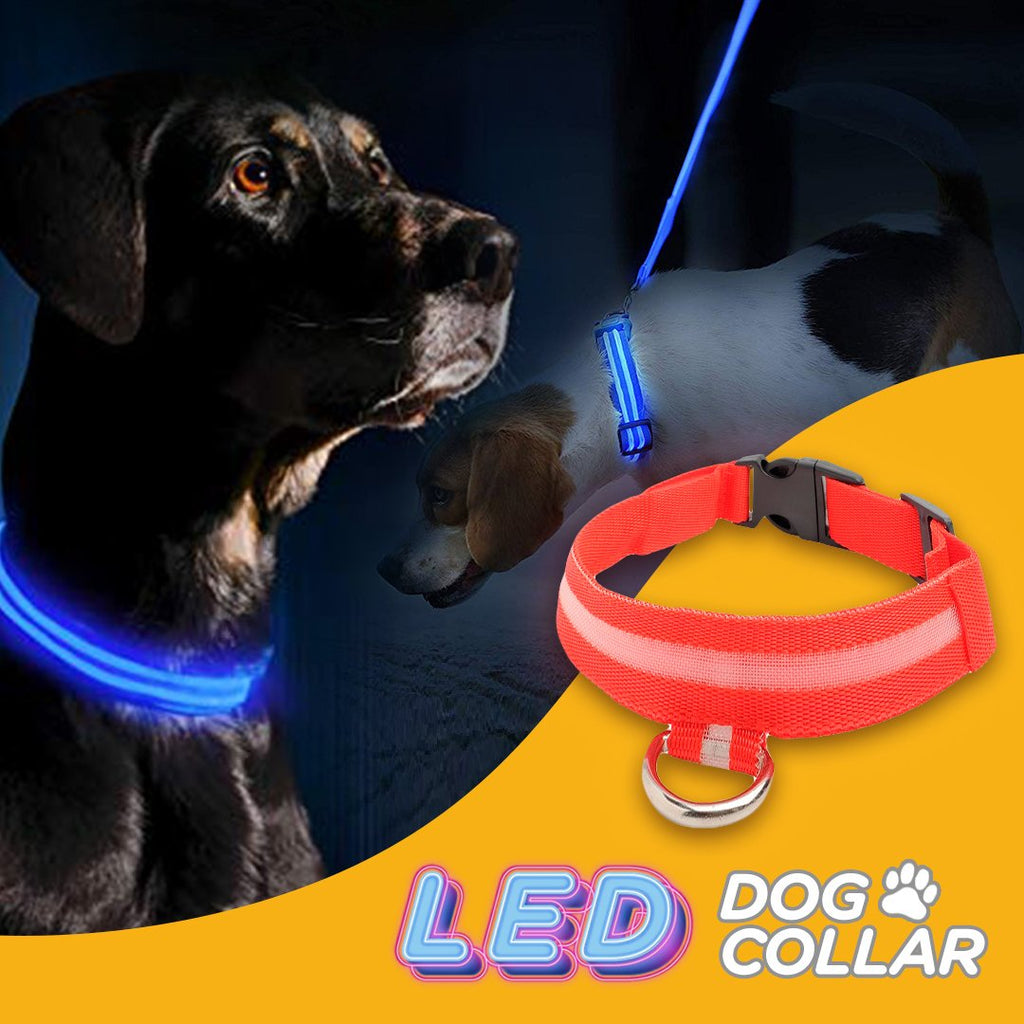 LED Glowing Safety Dog Collar