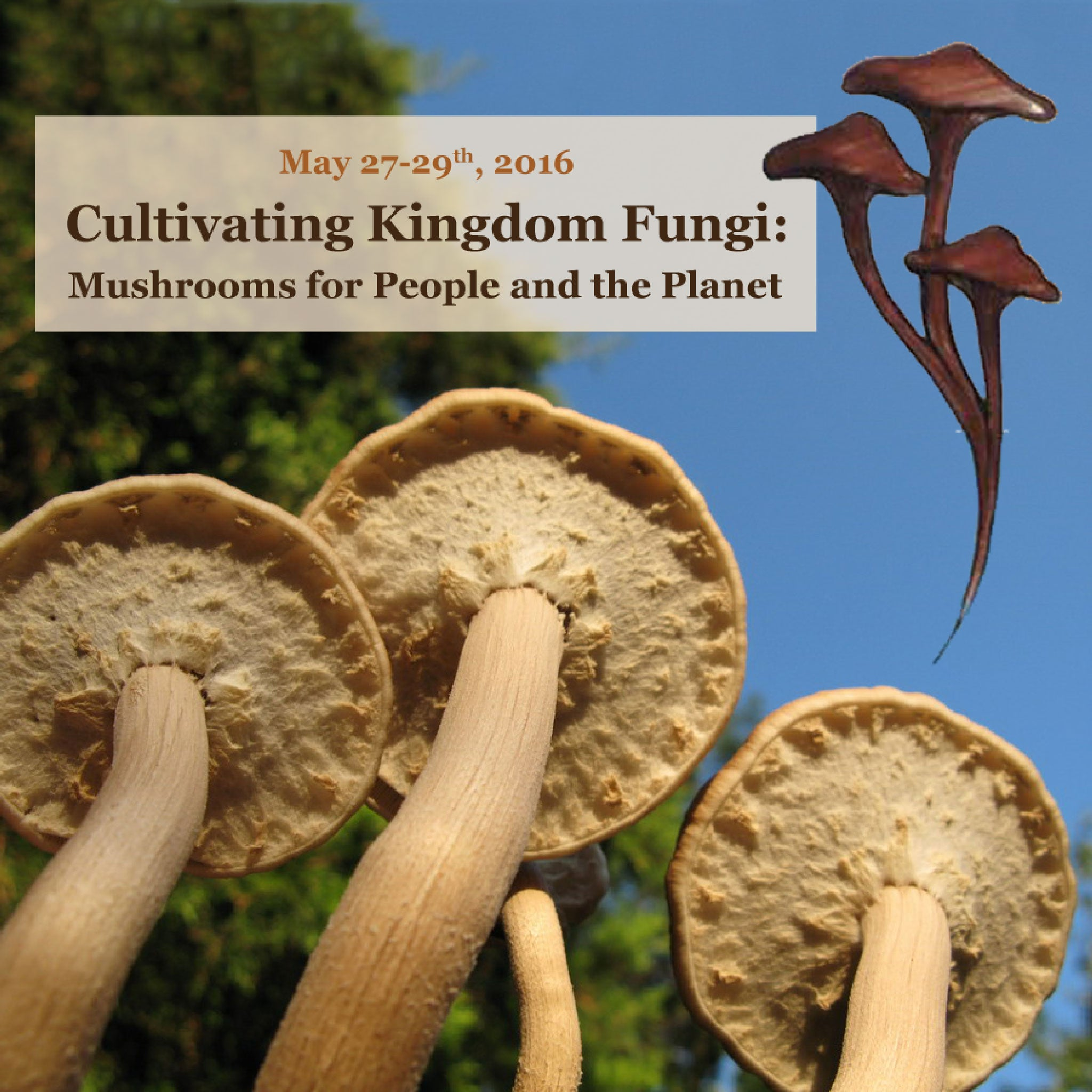 Cultivating Kingdom Fungi Workshop