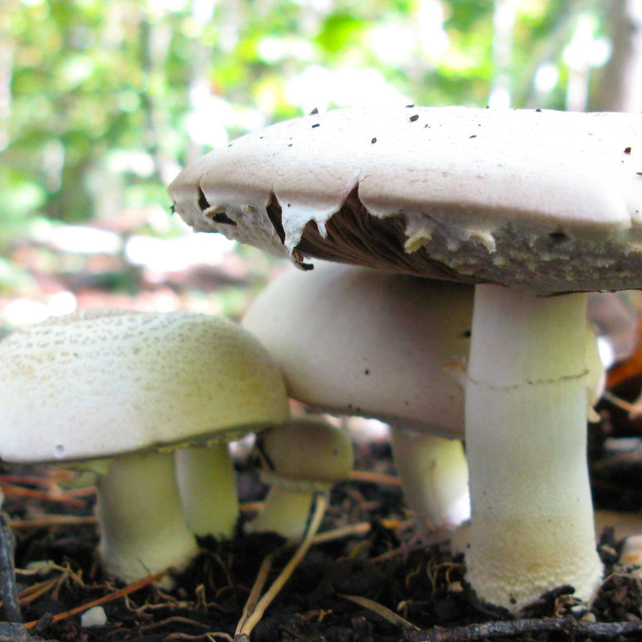 Diversifying Your Farm with Gourmet and Medicinal Mushrooms