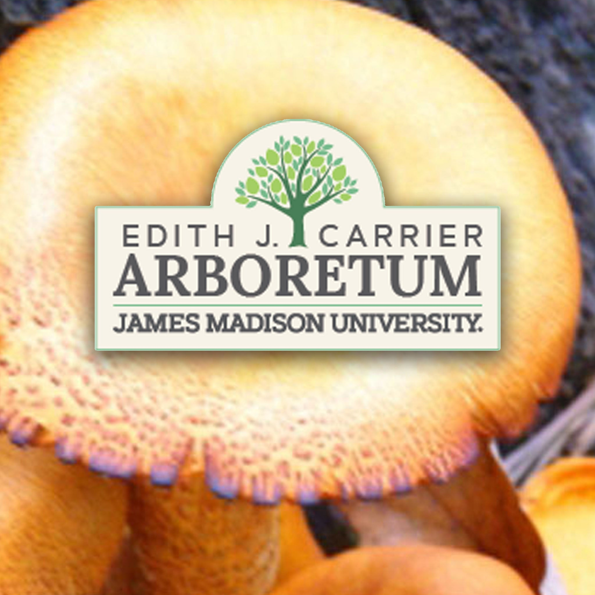 Growing Gourmet and Medicinal Mushrooms Workshop