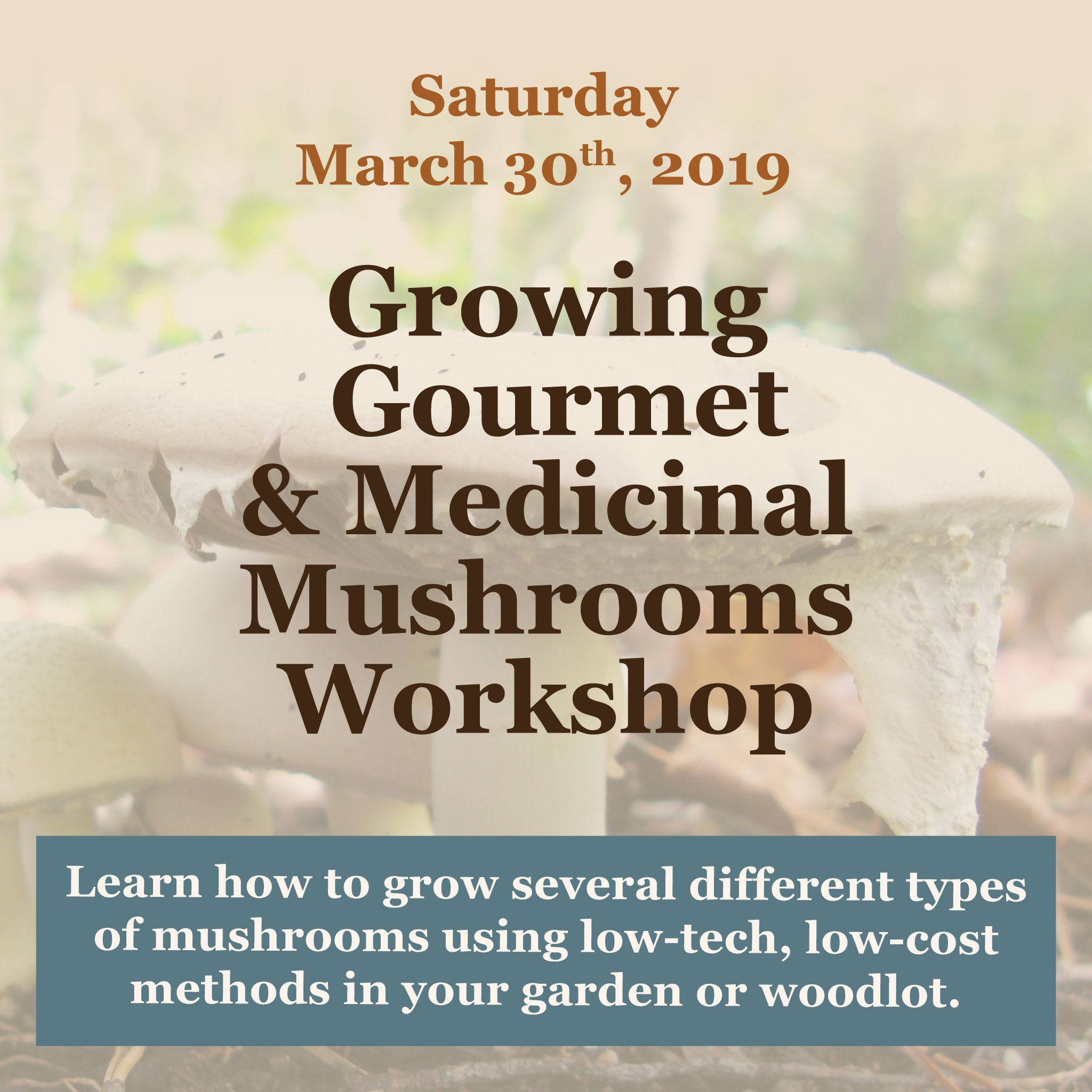 Growing Gourmet and Medicinal Mushrooms Workshop March 2019