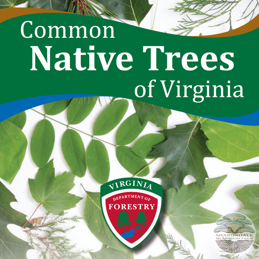 Common Native Trees of Virginia