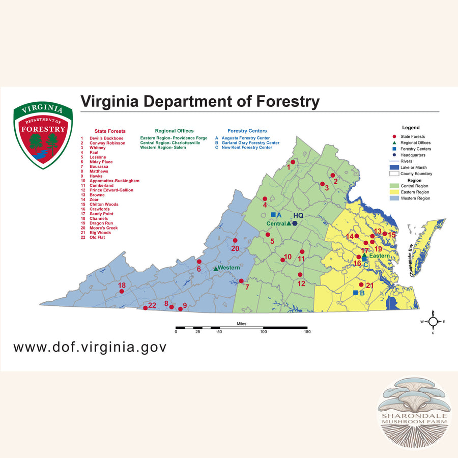 Common Virginia Trees Field Guide book
