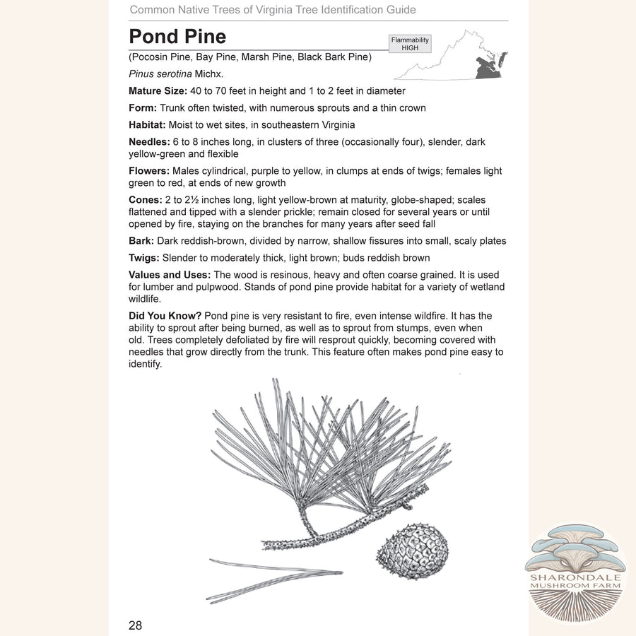 page 30 from Common Native Trees of Virginia A, a Virginia Department of Forestry field guide