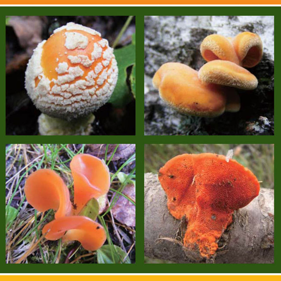 Fungi have the capacity to heal both the body and, through the process of myco-remediation