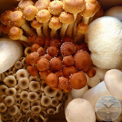 Farmer's Choice Specialty Organic Mushrooms